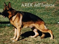 Picture of Arek dell' Isolotto