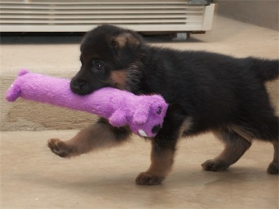 Purple says my toy is longer!