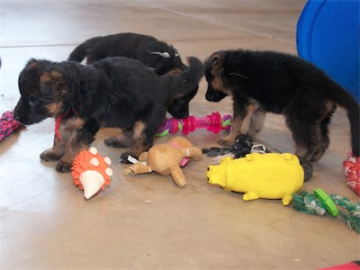 Red, White & Yellow picking out their next toy to play with.