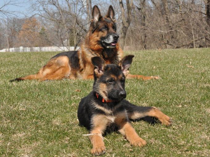 Dog Training Peoria Illinois