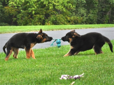 Guess we'll just have to play tug with it!