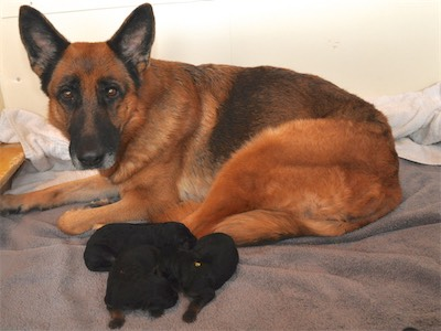 Nelly and her 3 puppies!
