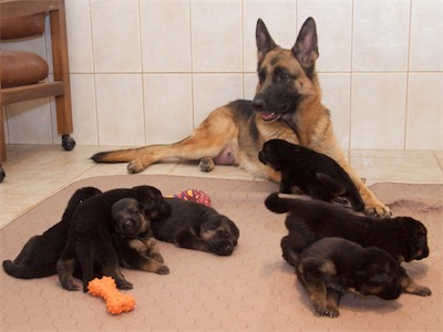Balti and her puppies
