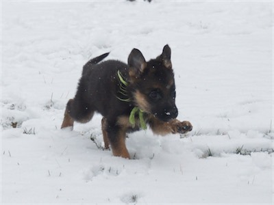 Green running through the snow!