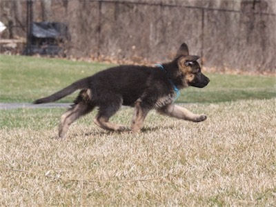Blue: check out my stride!